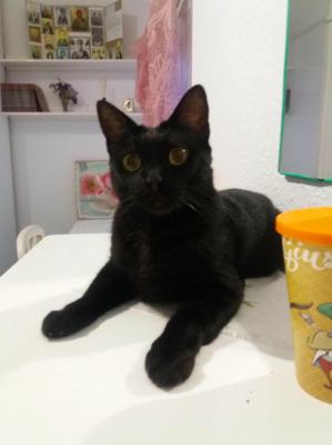 niedliche Kateryna (ALO) - Katze