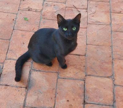 zurückhaltende Mey (ALO) - Katze 1
