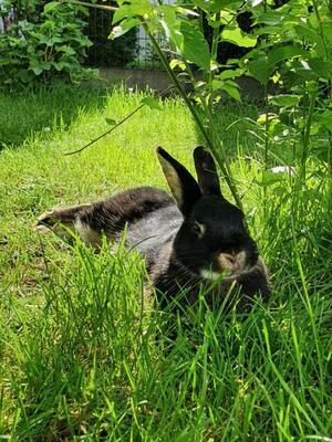 Hops, Aufenthaltsort:89287 Bellenberg - weiblich