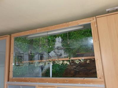 Riesenterrarium 205cm groß