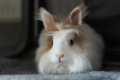 Tusnelda und Hoppel Mo, Kaninchen - weiblich 1
