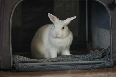 Tusnelda und Hoppel Mo, Kaninchen - weiblich
