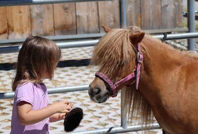 Cindy v. d. Runrot, Shetland Pony - Stute 1