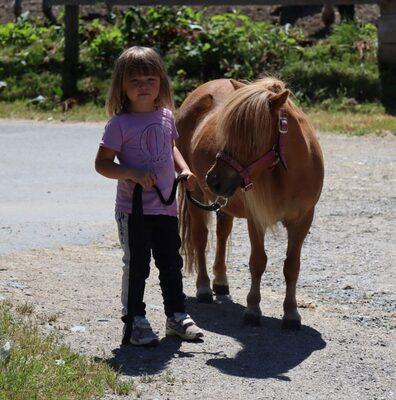 Cindy v. d. Runrot, Shetland Pony - Stute