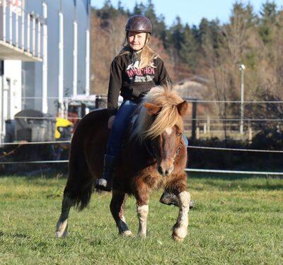 Daan, Shetland Pony - Wallach