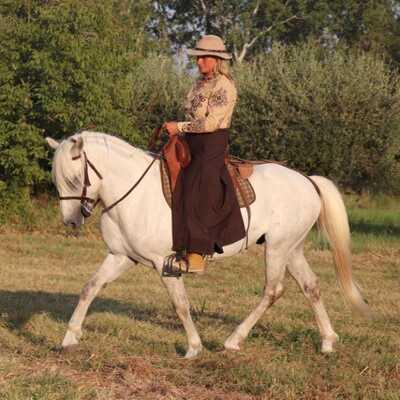 Die weißen Perlen von Südfrankreich, Camargue Pferd - Wallach