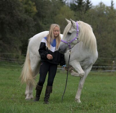 Eliso de Belugo, Camargue Pferd - Stute