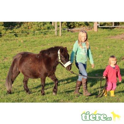 Jasmine, Shetland Pony - Stute