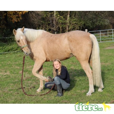 Rubia, Andalusier - Stute