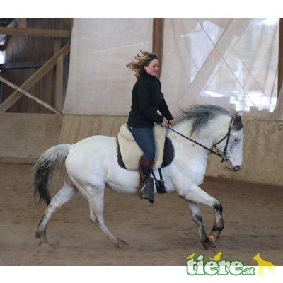 verschiedene Pferde abzugeben, Warmblut, Spanier, Araber - Wallach