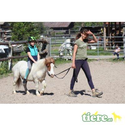 verschiedene ponys, Shetland Pony - Stute