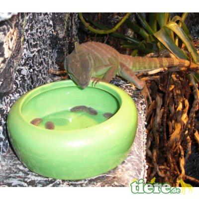 eBook: Lebendfutter f. Amphibien und Reptilien