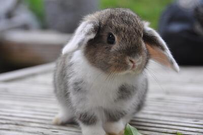 ganzjährig artgerechte Urlaubsbetreuung für Kaninchen